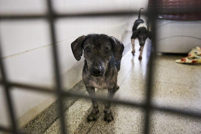 Lei proíbe extermínio de cães e gatos de rua